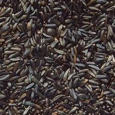 Avigrain Niger Seed