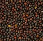 Avigrain Rape Seed